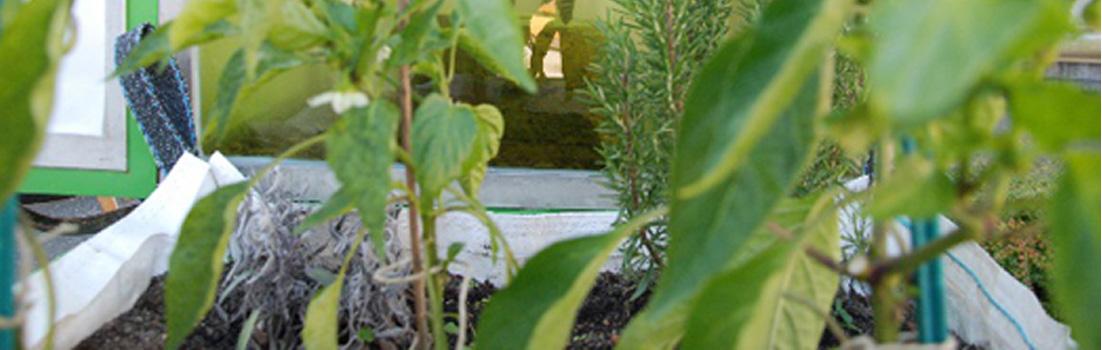 aquaponik in der stadt pflanzen f ttern fische gie en wissnet. Black Bedroom Furniture Sets. Home Design Ideas